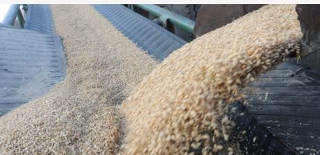 多国限制农产品出口 专家称不会冲击中国粮食安全